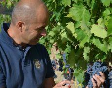 """2012年""""Wine Spectator""""トップ100発表!! イタリアワインの結果はいかに・・・"""