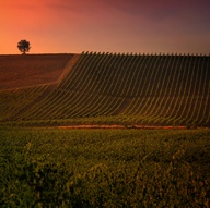 心配されていたワイン離れも過去のこと?イタリアの若者世代もワインへの感心が高いようで安心♥
