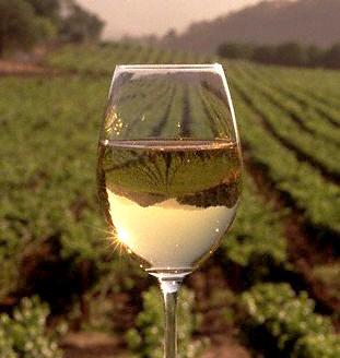 ワイングラスの中にあるもの・・・美味しさ意外に楽しめるものは?