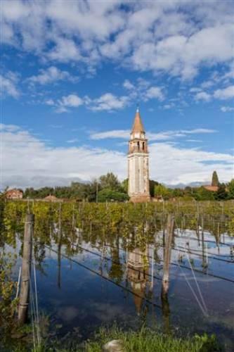 水から誕生したかのようなブドウ畑に目を疑う一瞬。ヴェネツィアならではの珍しい光景。