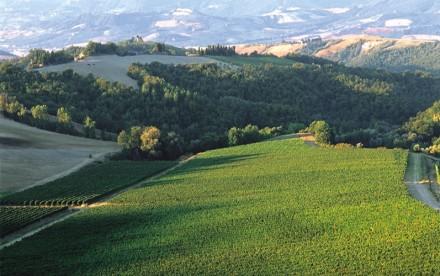 イタリア白ワインのトップに輝いたのは? 速攻購入すべきマストワイン!
