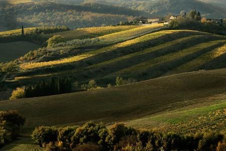 一番ツイートされたイタリアワイン。予想外?それとも予想通り?