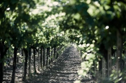 BONSAIの次はIKEBANAというワインを発見。さて、ネーミングの由来は?