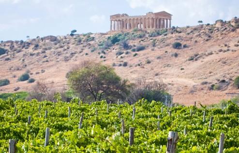 DIODOROS誕生。神殿のふもとで栽培されるブドウから造られるワインです。