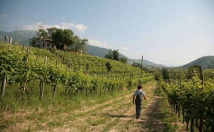 ドキドキしながら参加したワイン会。Cartizzeでスタートです。