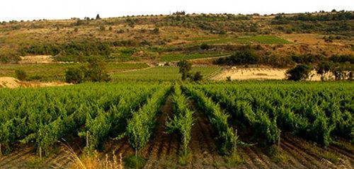 Cerasuolo di Vittoria…シチリア最初で唯一のDOCGワイン。