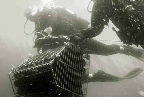 sea cellar…海底でゆっくりと寝かされたワインのお話です。