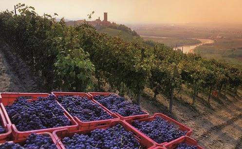 久しぶりのピエモンテ訪問。仕事後のワインが今から楽しみ。