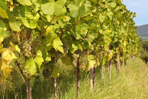 アルコール度数高めの白ワイン。美味しい発見に大満足。