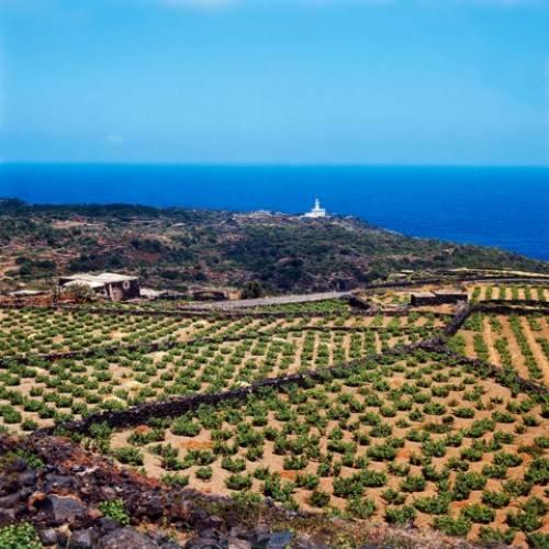 祝・ユネスコ登録!! ピエモンテに続いてシチリアでもブドウ関係の登録です。