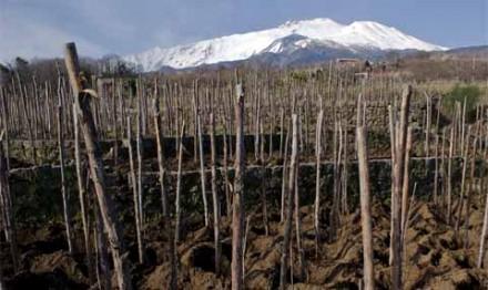 """週末アペリティーヴォは""""Etna Rosso""""。久しぶりのシチリアワインです。"""